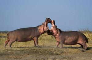 Katavi-National-Park-Safari