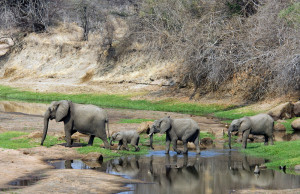Ruaha_National_Park