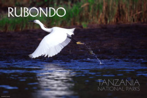 Rubondo national park