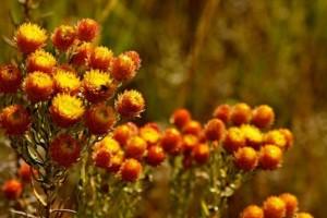 kituloflowers