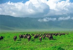 ngorongoro-crater2
